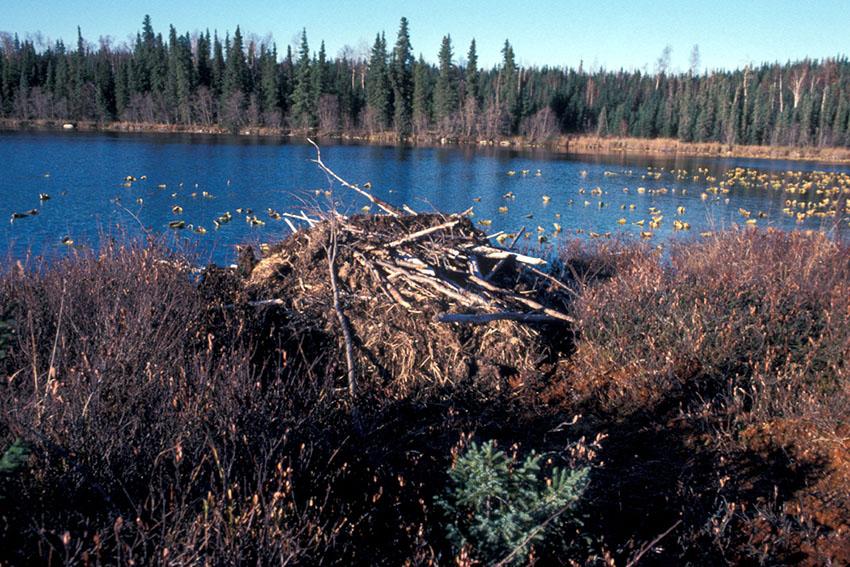 beaver_lake.jpg