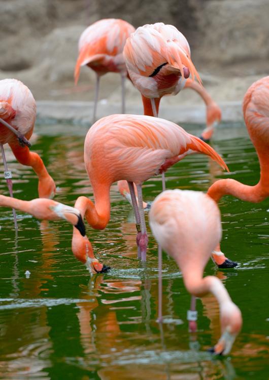 flamingo-1596A.jpg