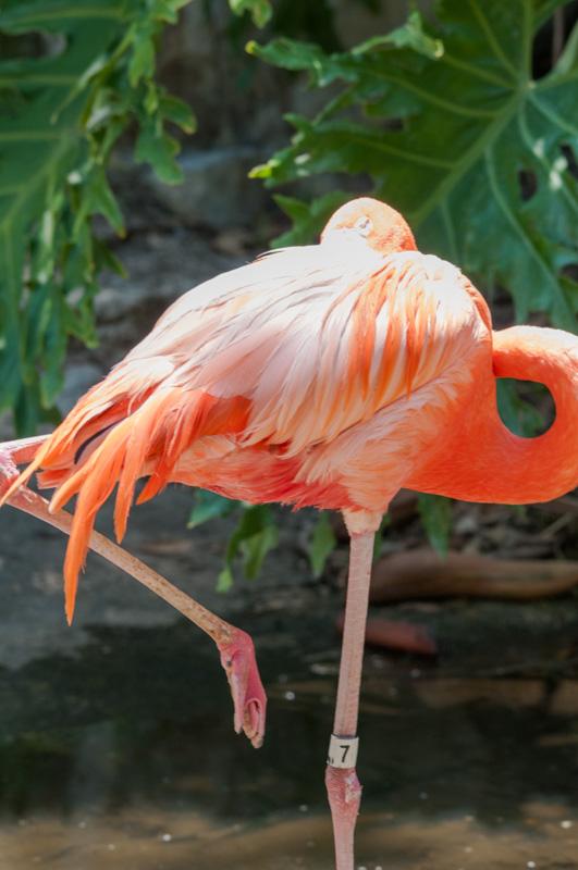 flamingo-bird-photo-4941.jpg