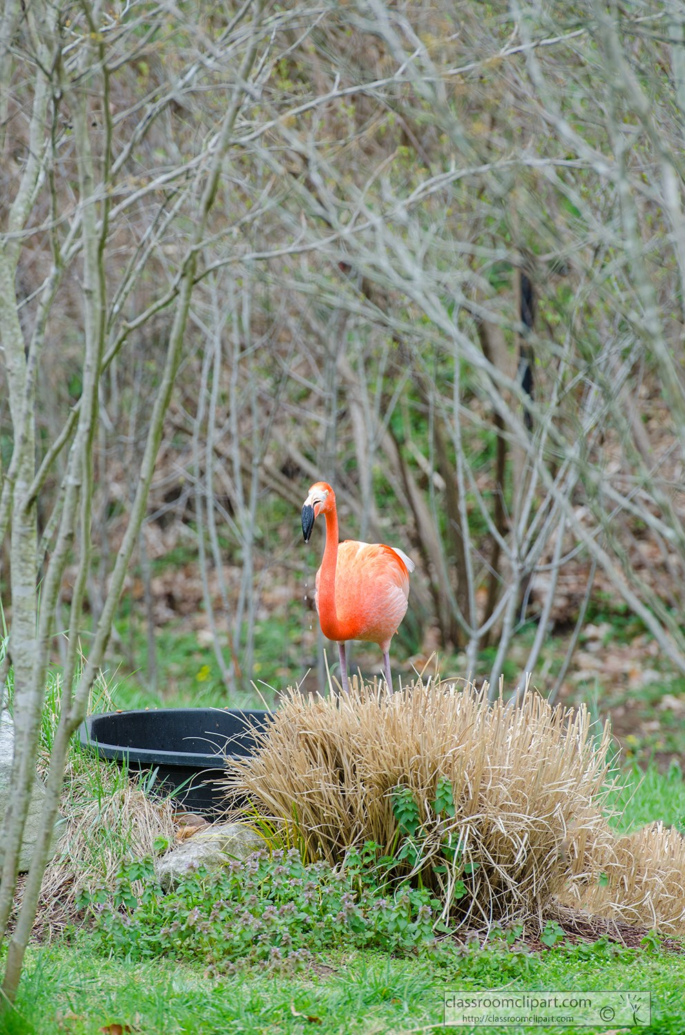 flamingo-standing-near-trees-photo-3832.jpg