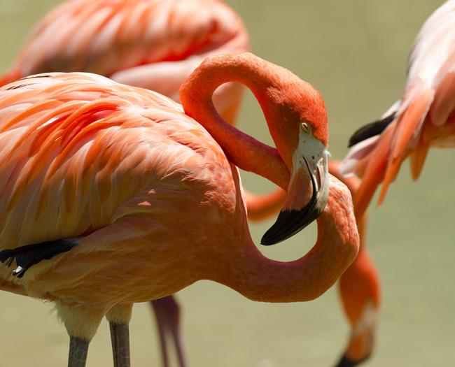 flamingo_0529.jpg