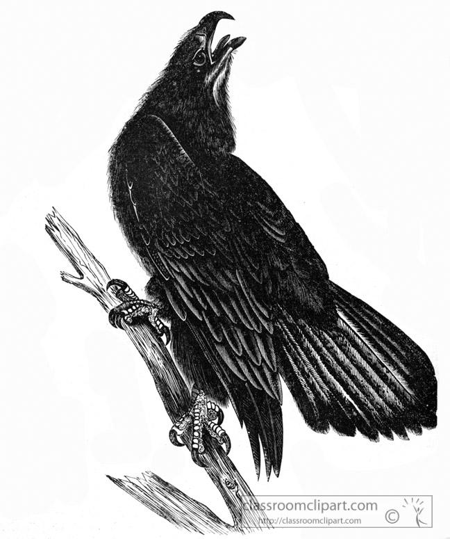 bald-eaglebird-illustration.jpg