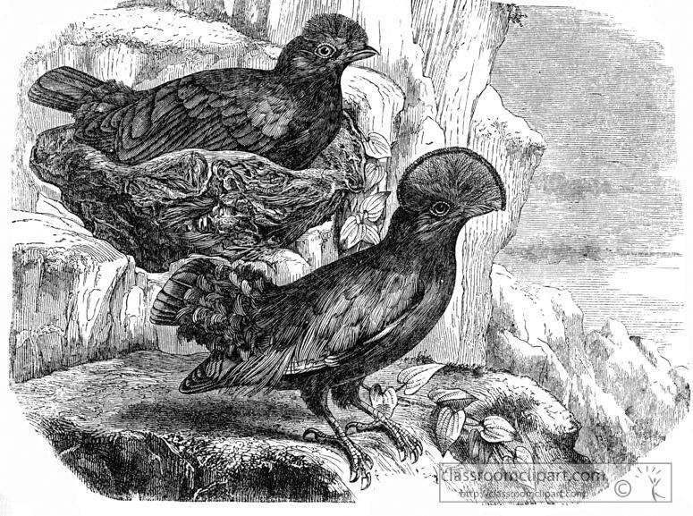 bird-illustration-1311.jpg