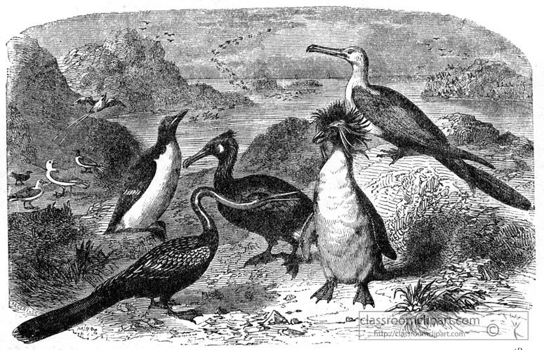 birds-bird-illustration.jpg