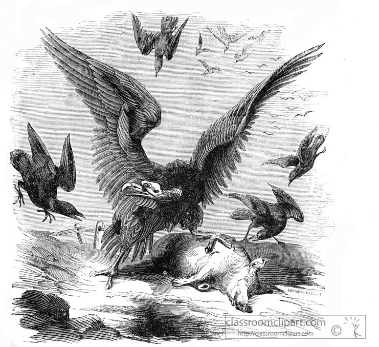buzzard-bird-illustration-13.jpg