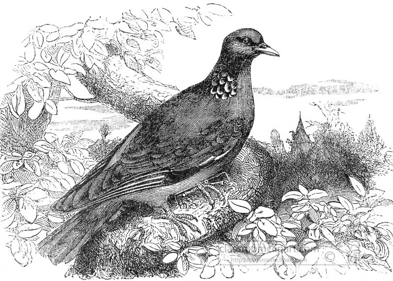 dove-bird-illustration.jpg