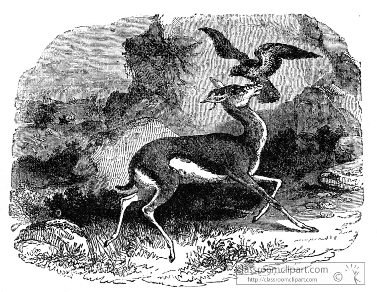 falcon-gazellebird-illustration.jpg