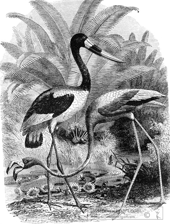 flamingo-bird-illustration-11.jpg