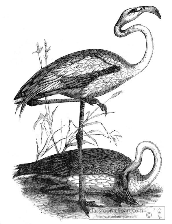 flamingo-bird-illustration-12.jpg