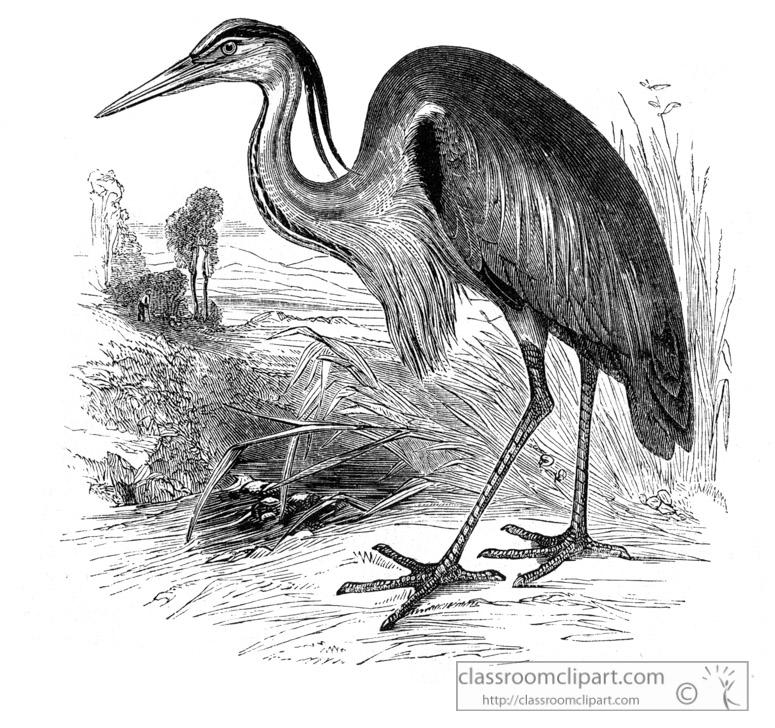 heron-bird-illustration-11.jpg
