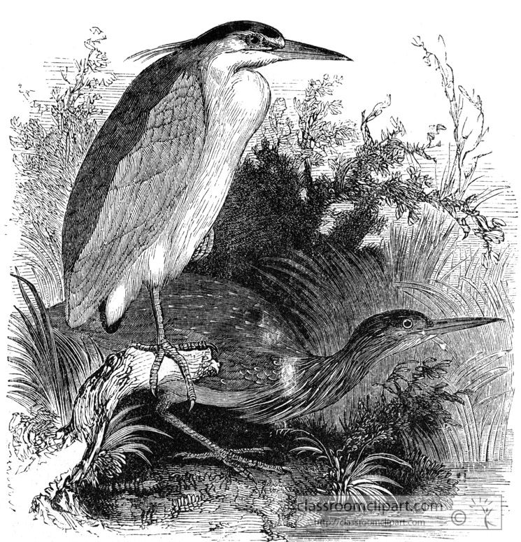 heron-bird-illustration-13.jpg