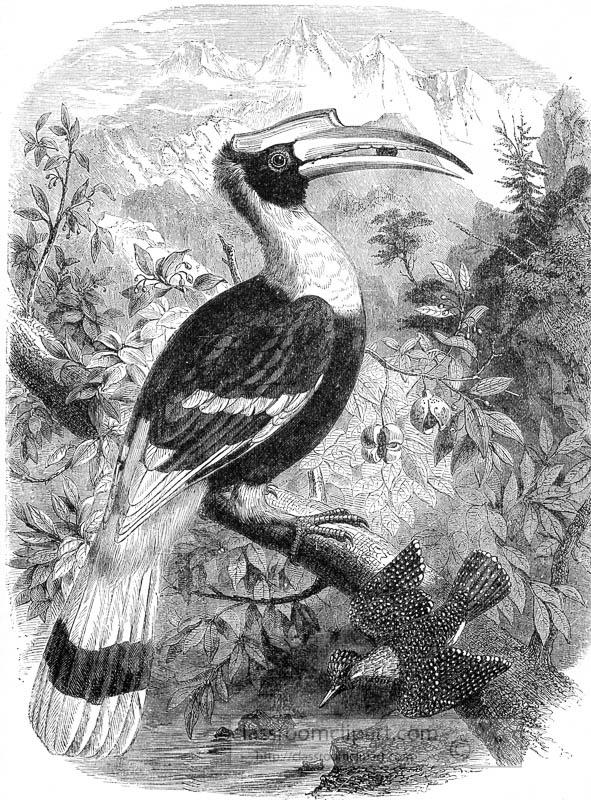 hornbill-bird-in-tropical-forest-illustration.jpg