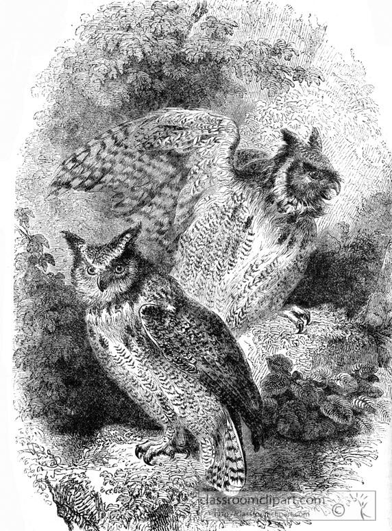 horned-owl-bird-illustration.jpg
