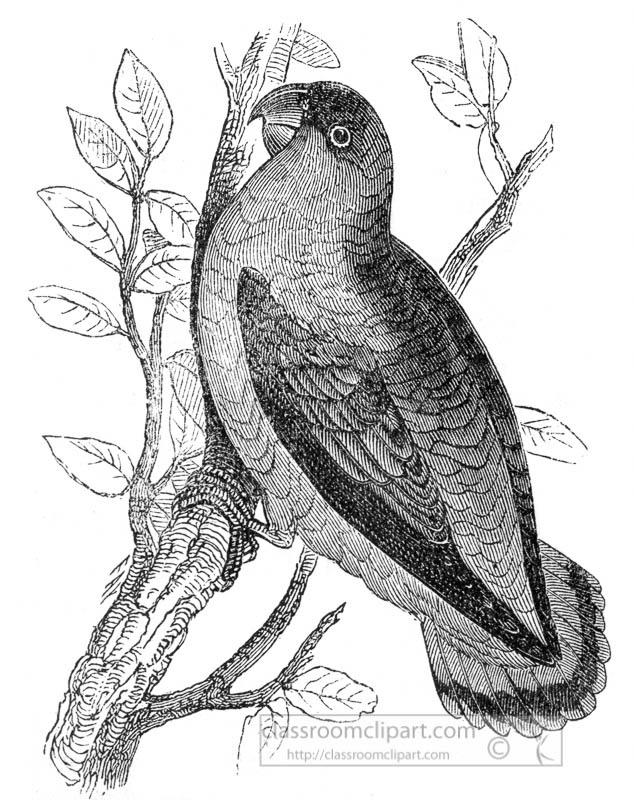 love-bird-illustration.jpg