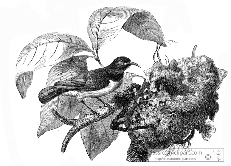 nest-bird-illustration.jpg