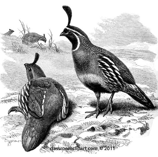 partridge-bird.jpg