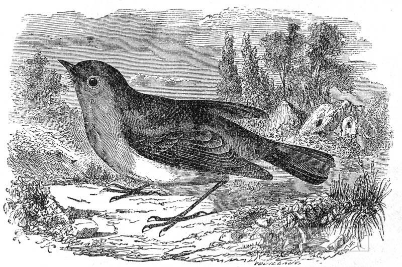 red-robin-bird-illustration.jpg
