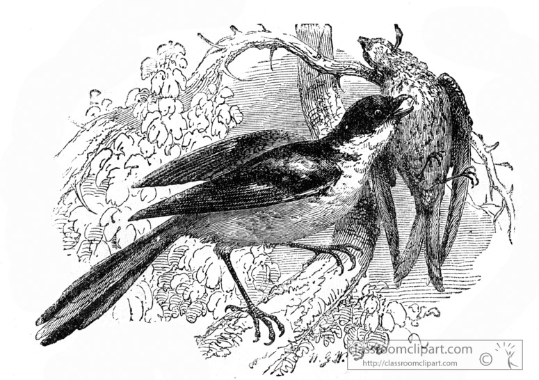 strike-bird-illustration.jpg