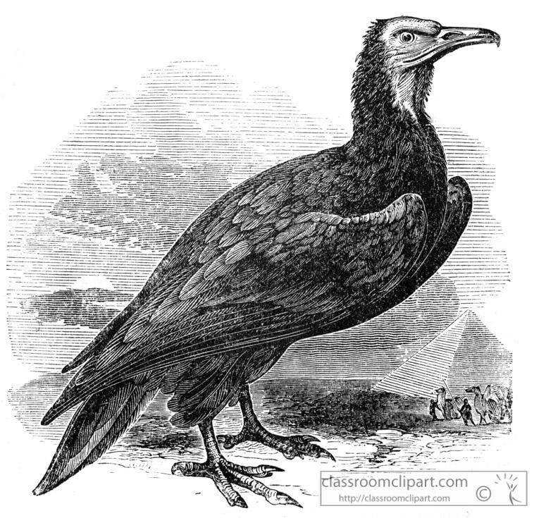 vulture-bird-illustration-1111.jpg