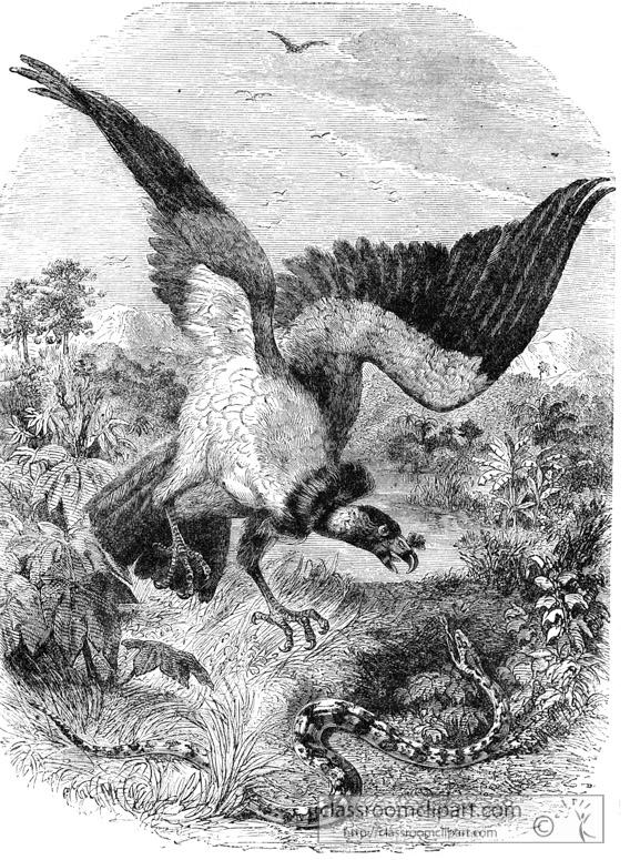 vulture-bird-illustration-12.jpg