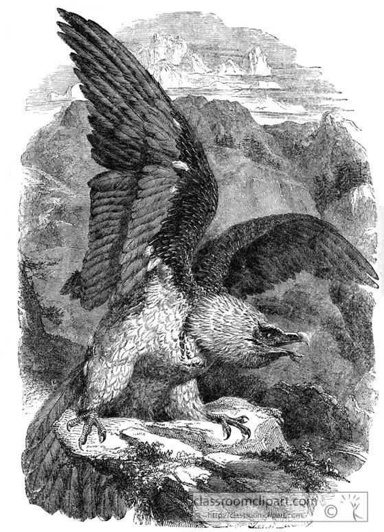 vulture-bird-illustration-1211.jpg