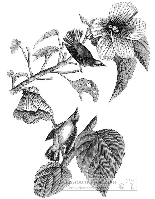 warbler-bird-illustration-003.jpg