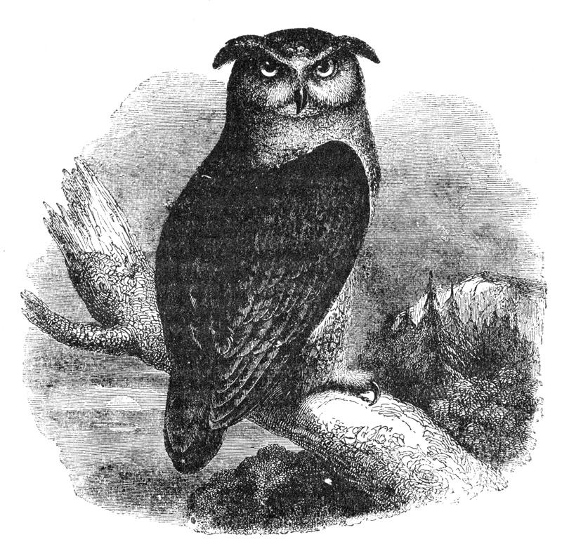 79_eagle_owl.jpg