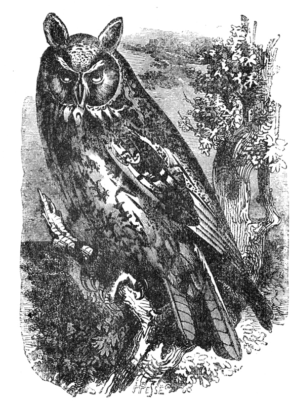 bird_75_owl.jpg