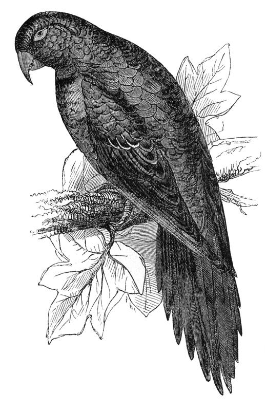 219_parrot_D.jpg
