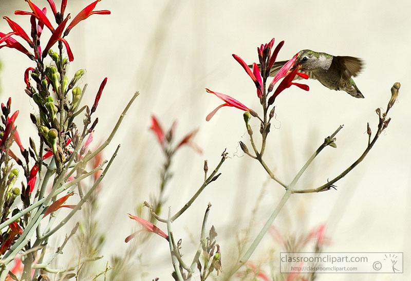 hummingbird_745.jpg