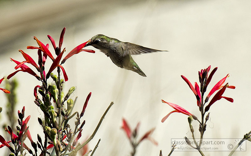 hummingbird_746.jpg