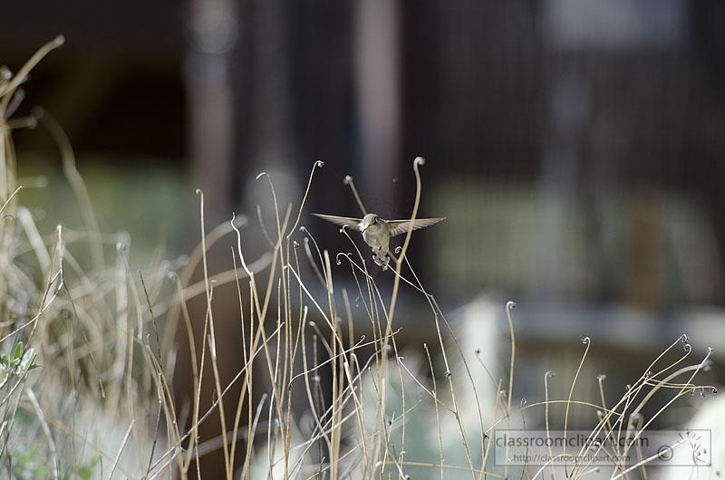 hummingbird_847.jpg
