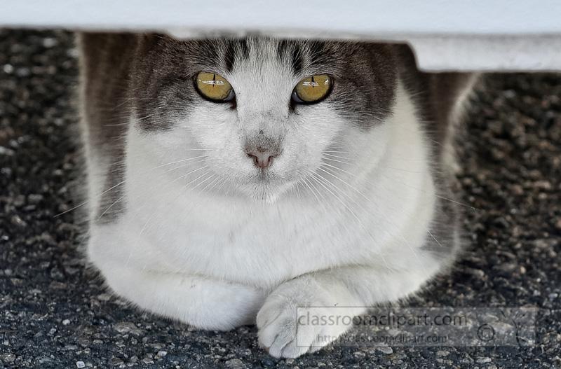 cat-sitting-beneath-car-picture-C_4600-2015.jpg