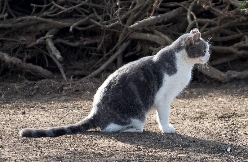 feral-cat-at-beach-4553.jpg