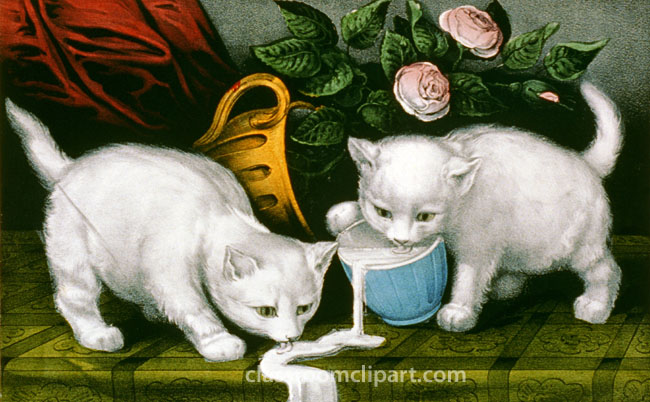 playful_two_white_cats_milk.jpg