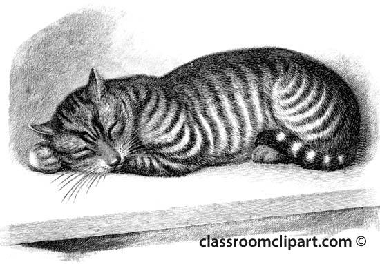 sleeping_cat_216.jpg