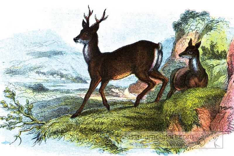 one-roe-deer-standing-one-roe-deer-sitting.jpg