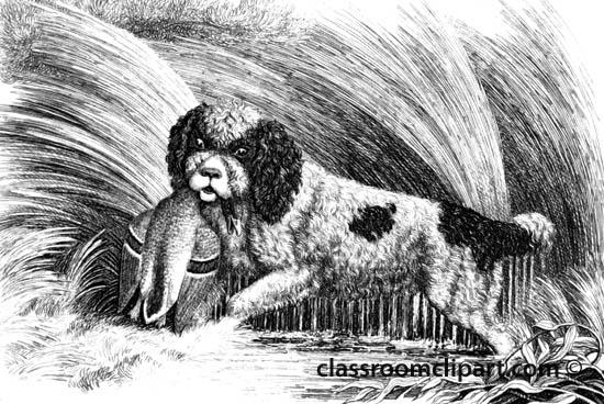animal_illustration_232A.jpg
