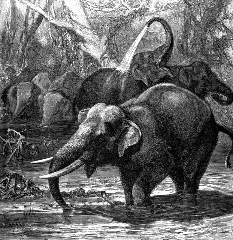 elephants-in-water-192A.jpg