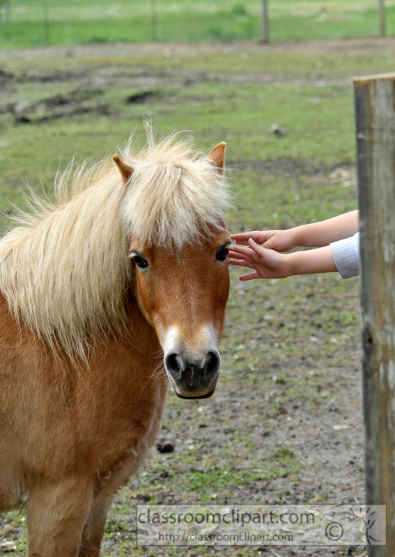 children-petting-pony-at-farm-photo-78.jpg