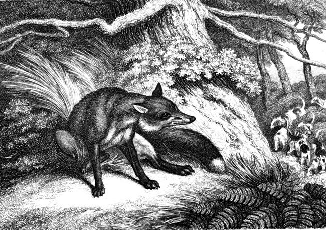 fox_069A.jpg