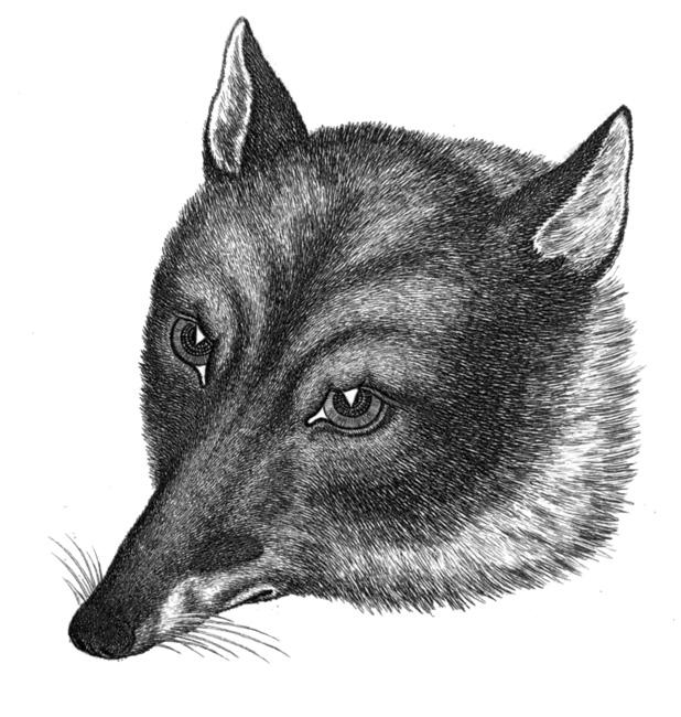 fox_178Z.jpg