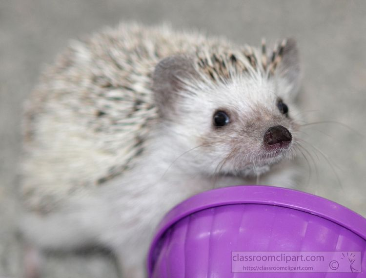 hedgehog-picture_19A.jpg