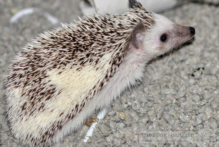 hedgehog-picture_47A.jpg