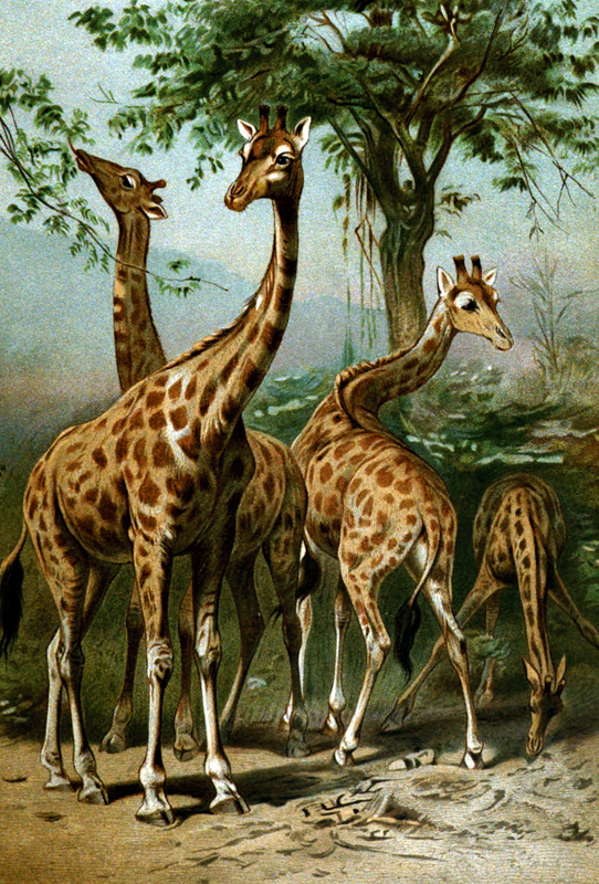 giraffees-standing-near-tree.jpg