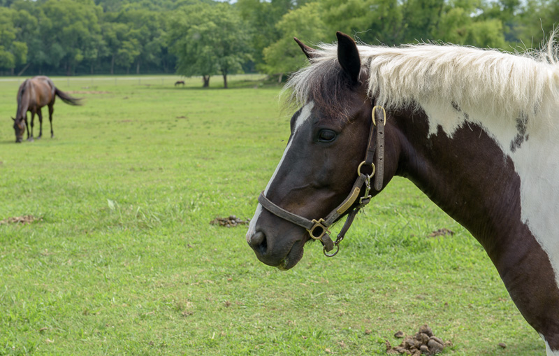 brown-and-white-spotted-horse-on-farm-side-view-photo-image-418E5.jpg