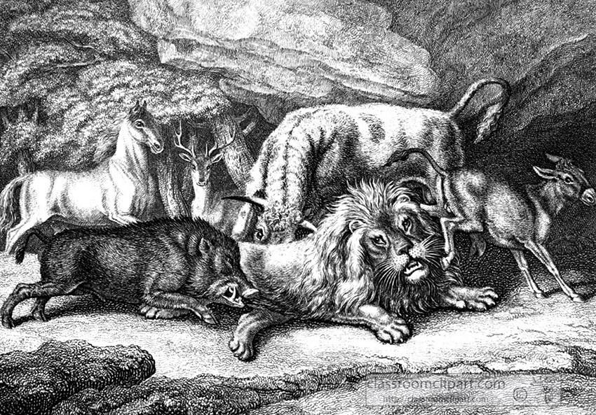 lion_boar_042A.jpg