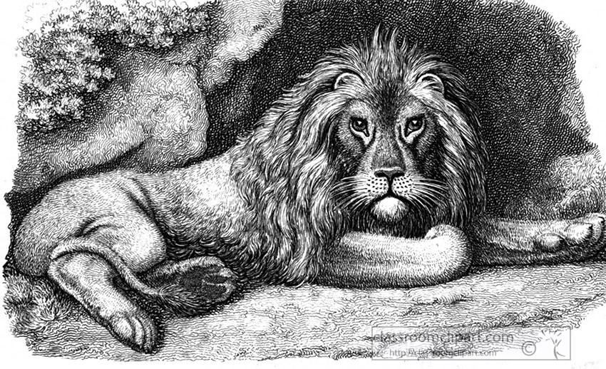 lion_resting_134.jpg