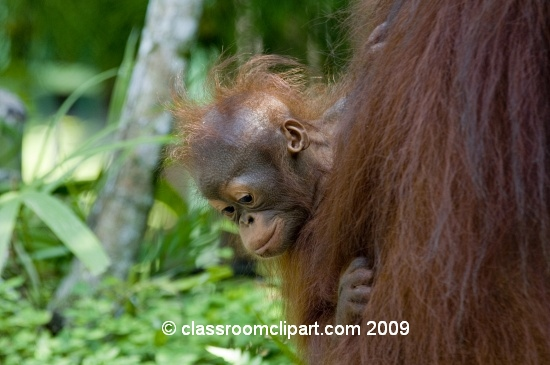 Borneo_1588.jpg
