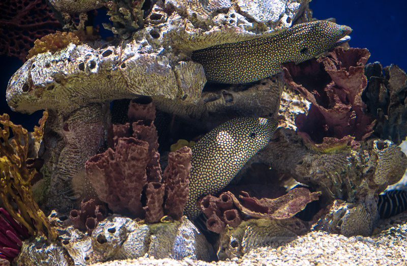 photo-of-moray-eels-hiding-in-rocks-and-coral-image-8191.jpg